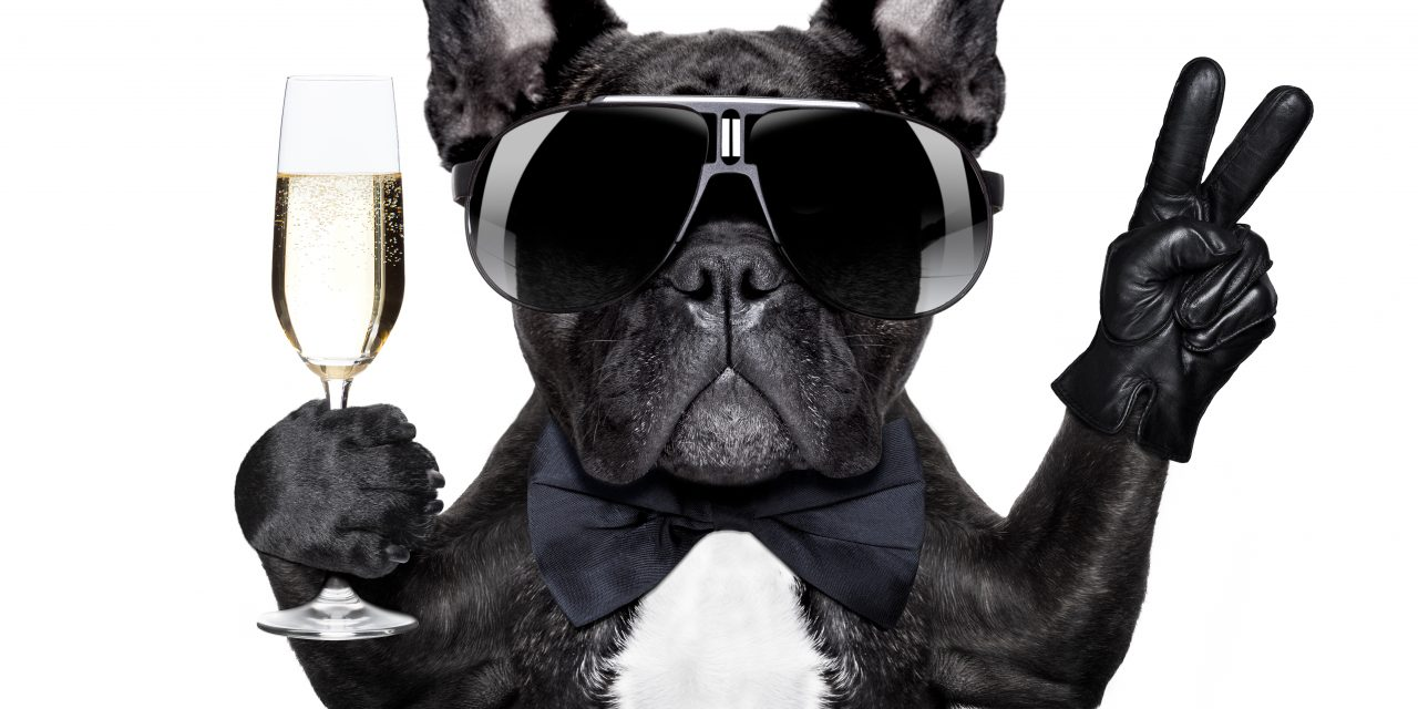 Introducing William The Frenchie…
